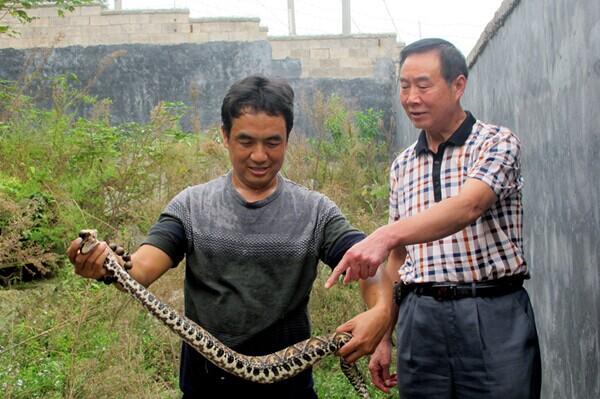 图为彭小兵向来访客户介绍五步蛇养殖技术